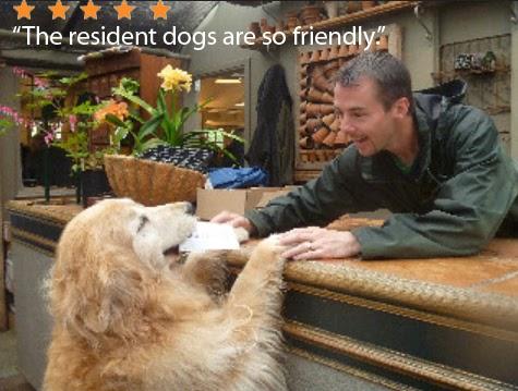 عکس 8 راه برای قهرمان سازی حیوانات در استراتژی بازاریابی مشاغل محلی خود